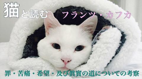 【猫と読む文学】「罪・苦痛・希望・及び眞實の道についての考察」フランツ・カフカ(朗読:ももすももす)