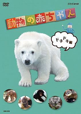 NHK-DVD �����̐Ԃ���� �h�L�h�L��