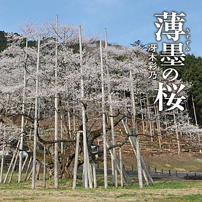 冴木彩乃 / 薄墨(うすずみ)の桜